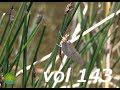 vol143.jpg